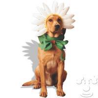 dog_flower.jpeg